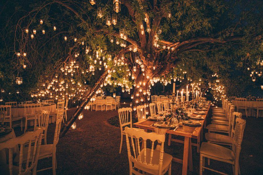Dinner under the tree